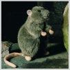 Ratte Rudi